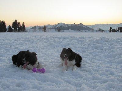 ジェムとメロの雪遊び