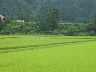 今朝の新潟県南魚沼市は気温が低く、8月とは思えないほど肌寒く感じます